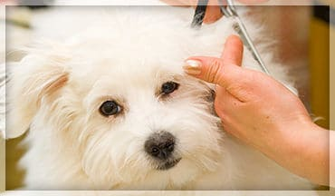 pet grooming maintenance