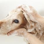 sherwood park dog bath packages