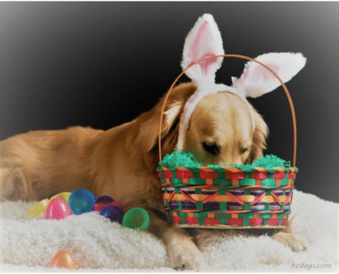 Easter Sherwood Park Dog Grooming Special
